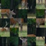 Animals100d