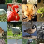 Explore the Animal Kingdom (iPad) - Landscape