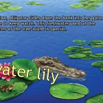 Alligator at Saw Grass Road (iPad 2) - Interactive