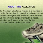Alligator at Saw Grass Road (iPad 2) - Facts