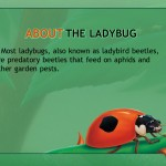 Ladybug at Orchard Avenue (iPad 2) - Facts
