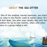 Otter on His Own (iPad 2) - Facts