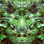 Mirrorgram 2