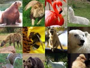 Explore the Animal Kingdom version 1.5 (iPad 2) - Landscape