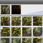 iLapse version 1.2 (iPhone 4S) - Photo Blending Library