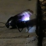 iPhone Controlled Bug - Glow (Night)
