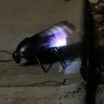 iPhone Controlled Bug - Glow (Night)