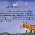 Red Fox at Hickory Lane (iPad 2) - Bonus Facts