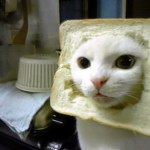 One of the first bread cats.