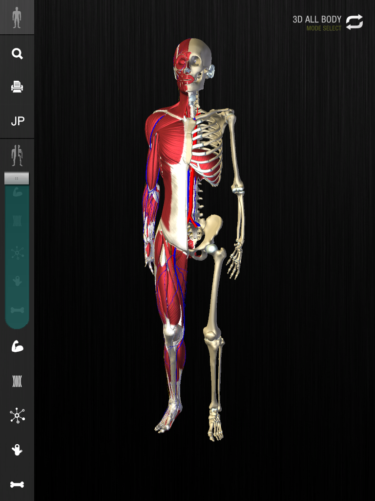 teamLabBody-3D Motion Human Anatomy