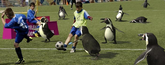 EFX - Penguin Kids Play