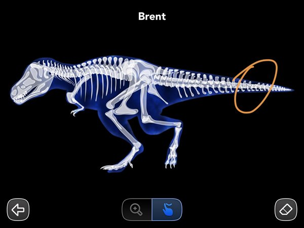 The interactive animal X-ray is a lot of fun.