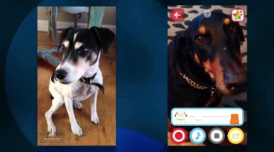 AppAdvice Daily: You'll Be Laughing As You Get Your Pets Talking With My Talking Pet