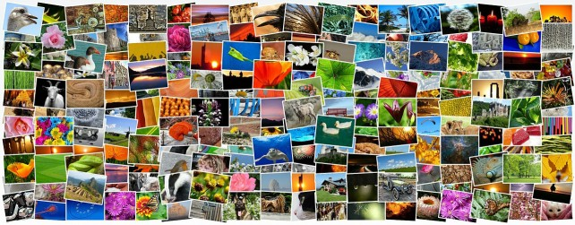 Join the Camera Club to share your photos in real-time