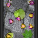 Review: Pocket Frogs - Gotta Catch 'Em All