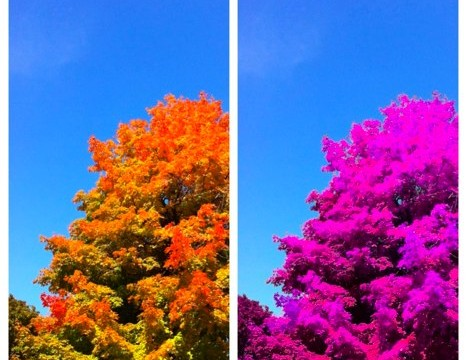 QuickAdvice: Selectively Colorize Your Photos With ColorBlast!