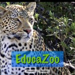 Babies And Preschoolers Will Love EducaZoo