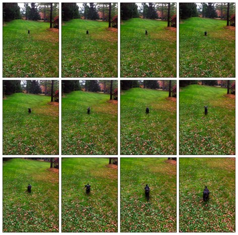 QuickAdvice: Capture The Action With Burst Mode - Plus, Win A Promo Code!