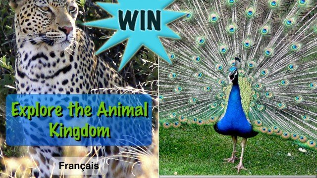 A Chance To Win An Explore The Animal Kingdom (Universal) Promo Code With A Retweet Or Comment