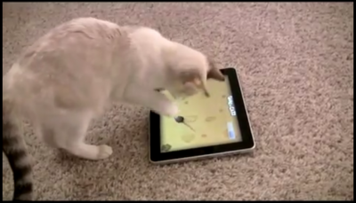 Game For Cats - An iPad App For Your Feline Friend