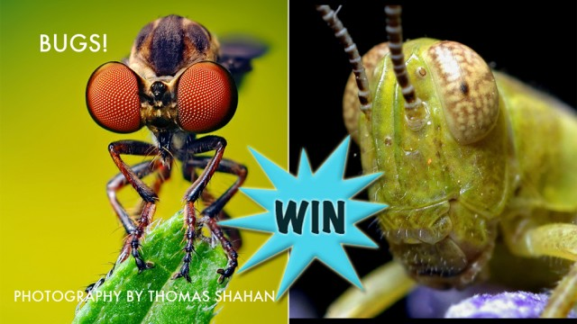 A Chance To Win A Bugs! (Universal) Promo Code With A Retweet Or Comment