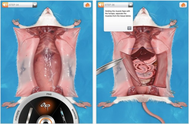 Rat Dissection For iPad: Gory, Grizzly, Biological Fun