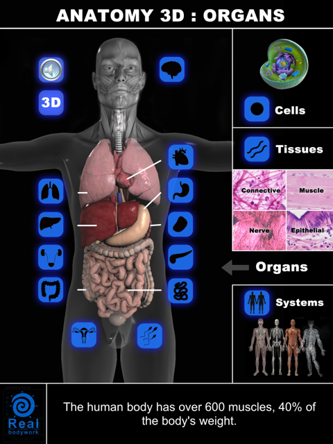 Enjoy Researching Human The Human Body? Anatomy 3D: Organs Will Be A Very Helpful Tool