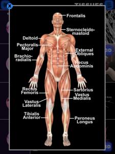 Anatomy 3D: Organs by Real Bodywork screenshot