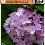 Uploader+ For Facebook, Free For A Limited Time