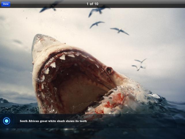 Ultimate Sharks - Open Wide!