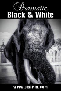 Dramatic Black & White by JixiPix Software screenshot