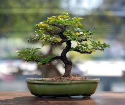 If You Love Your Bonsai, You Should Have An App For Them