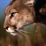 The Wall Street Journal Talks Mountain Lion With Apple CEO Tim Cook
