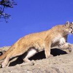 Apple Unveils OS X Mountain Lion, Further Blurs The Desktop/iOS Line