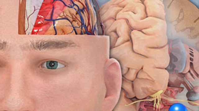 Pocket Brain Offers A Journey Into The Human Brain