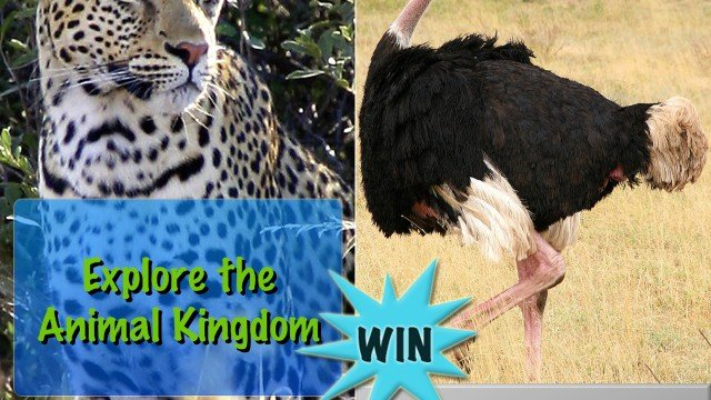 Give An Early Learning Adventure By Winning Explore The Animal Kingdom For iPad And iPhone