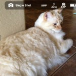 Make Your iPhone 5 Operate Like A Real Camera By Winning A Copy Of ProCam