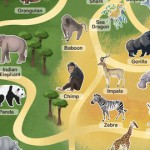 Pocket Zoo For iPhone Updated With More Zooperb Content