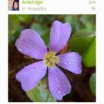 Lytro's New Companion iOS App Lets You Upload And Refocus Photos On The Go