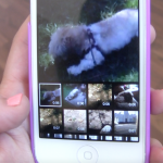 AppAdvice Daily: Capture your pets using Vine, Petpoc and Barkcam