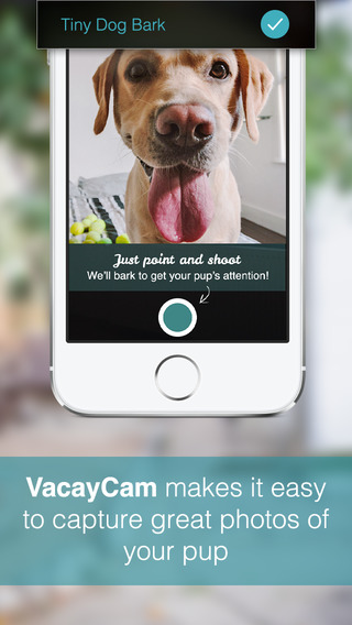With VacayCam, DogVacay users can take photos of their dogs on vacation
