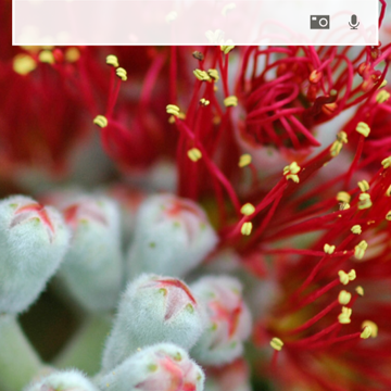 Microsoft updates Bing with new design for iPhone and iOS 8 extensions for iPad