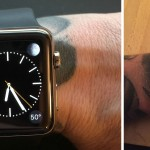 Cupertino confirms a problem with tattoos and Apple Watch