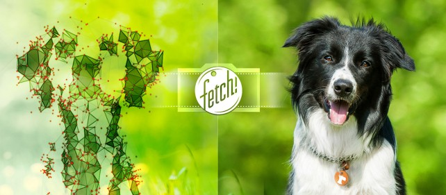 Fetch! Microsoft's new app lets you know what dog breed you are